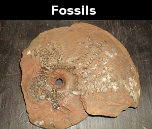 Learn about fossils found in Delaware