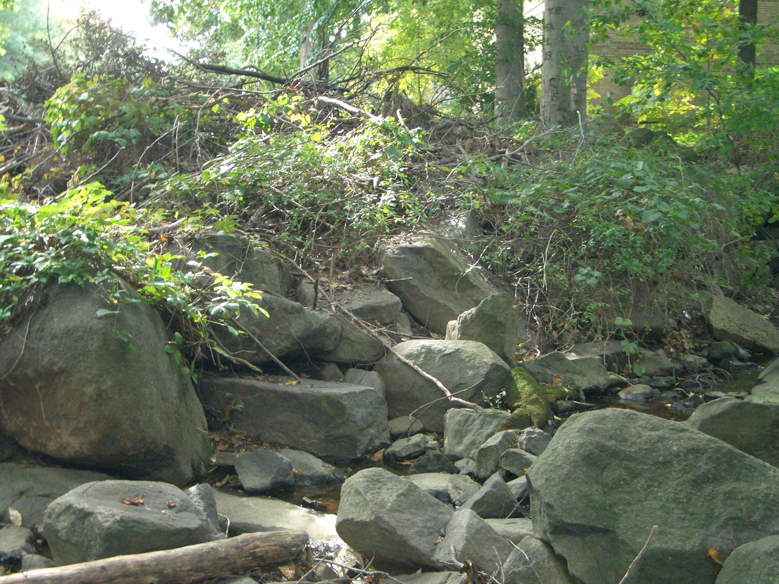 Outcrop Be32 G Lesher Park Streambed The Delaware