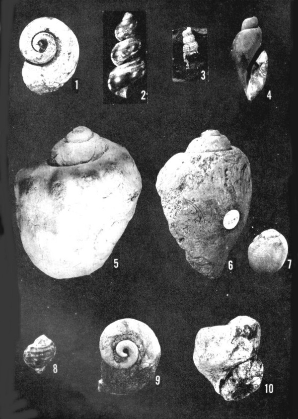 Clams, Snails, and Squid: Phylum Mollusca, Class Gastropoda | The