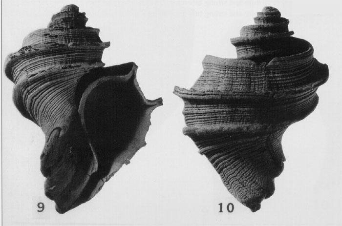 Snails and Slugs: Phylum Mollusca, Class Gastropoda   The Delaware