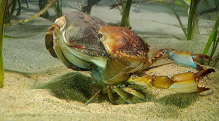 Insects and Crustaceans: Phylum Arthropoda